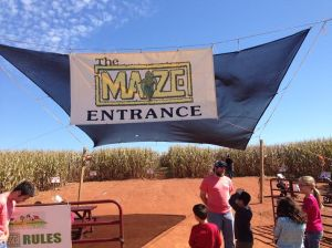 "The Maize Maze - don't go if you remember the movie, ""Children of the Corn""!"
