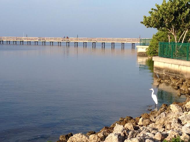The Peace River, Charlotte Harbor, Florida